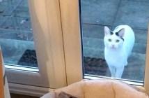 毎日窓の外に現れる猫