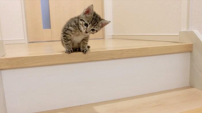 階段を覗き込む子猫