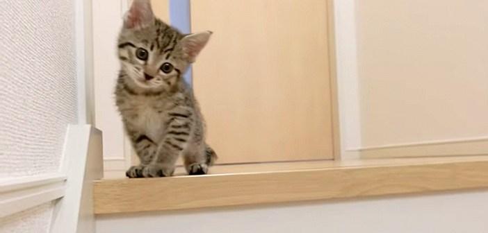 階段にチャレンジする子猫