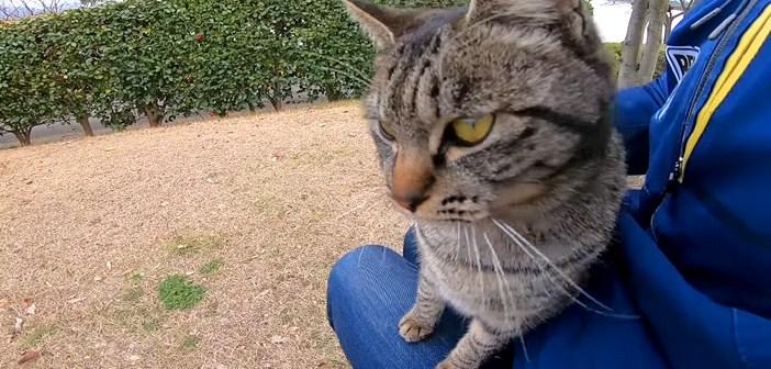 膝に乗ってきた猫