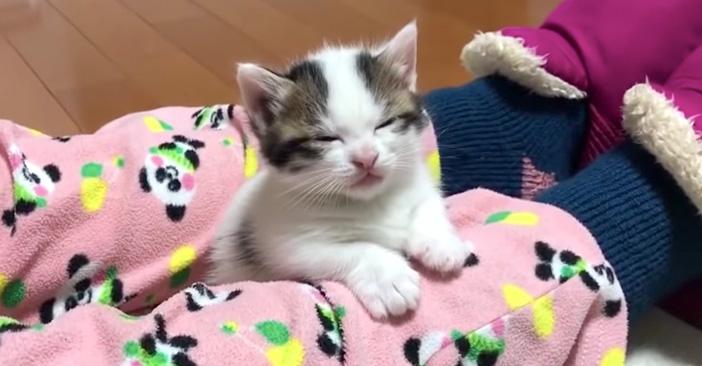 寝落ちする可愛い子猫