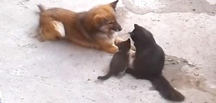 昔からの親友に、我が子を紹介しに来た母猫。親友の犬はとっても嬉しかったようで、愛らしい反応が返ってきた (*´ω`*)♡
