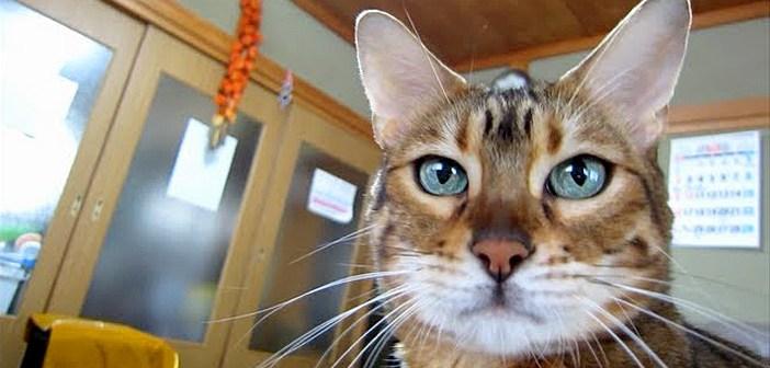 ピカピカになった猫