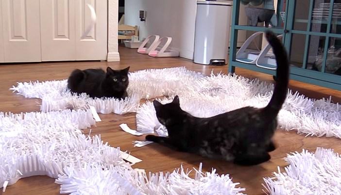 楽しそうに雪で遊ぶ猫