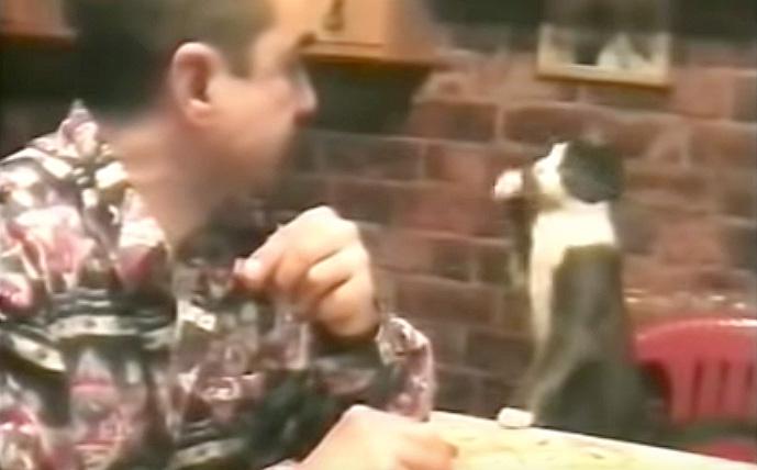 手話を使う猫