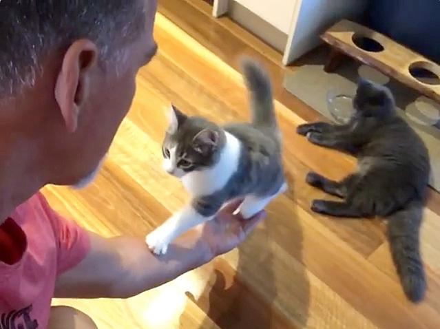 手に登ってくる猫