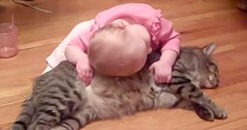 赤ちゃんに懐かれる猫