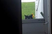 家を覗いてきた猫