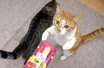 ちゅーる好きの猫