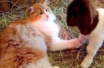猫と子ヤギ