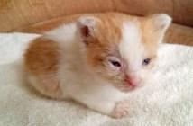 花壇の中から保護された子猫
