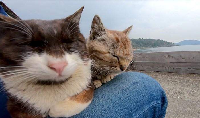 膝に乗る猫達