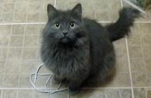 紐で遊びたい猫