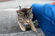 膝に登ってくる猫