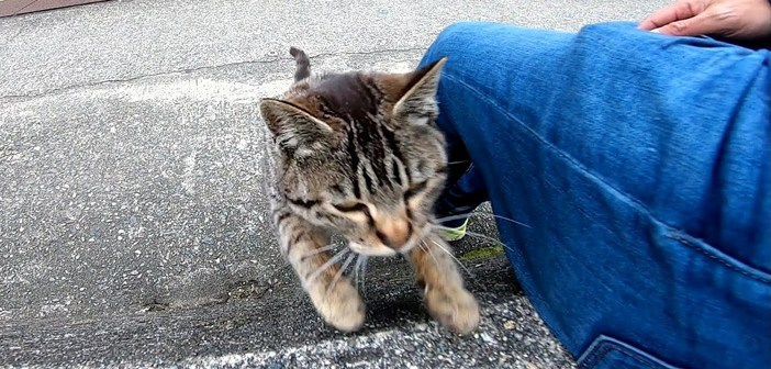 道端で座る野良猫さんを発見♪ 早速ナデナデしてみると、一瞬で気を許して、喜んで膝の上に乗ってきてくれた (〃∇〃)♡