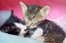 兄弟と一緒の子猫