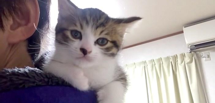 どうしても肩の上で寝たかった子猫。飼い主さんの身体を伝ってきて、ふわふわのフードの中でウトウトする姿が可愛すぎる