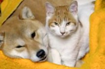犬と猫の可愛い行動