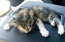 道路で保護した子猫
