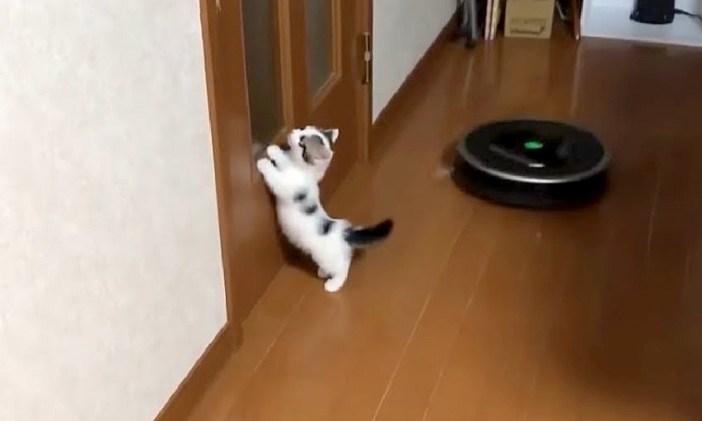 ルンバと子猫