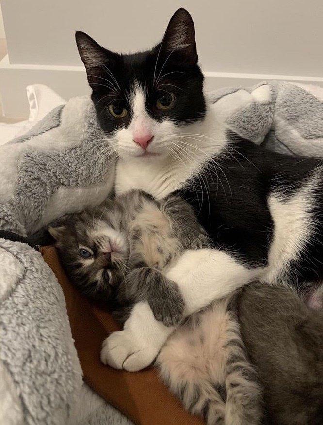 仲良しな猫と子猫