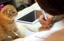 勉強が終わるのを待つ子猫