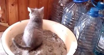 トイレ初心者の子猫