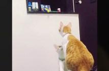 オモチャが欲しい子猫