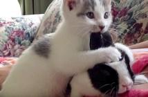 うさ耳好きの子猫
