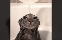 打たせ湯を堪能する猫