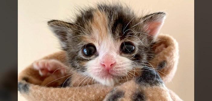 家の下から保護された子猫