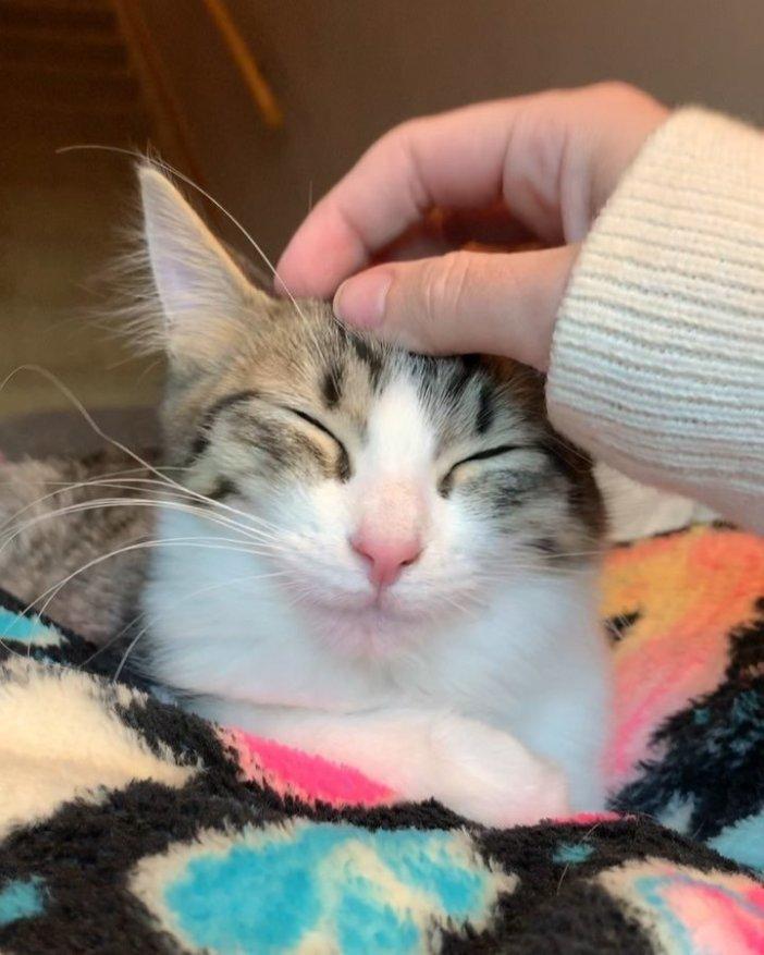 幸せ顔の子猫