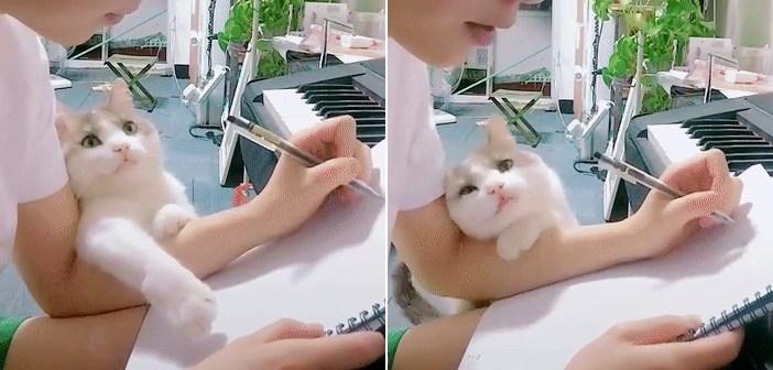 飼い主さんが大好きな猫さん