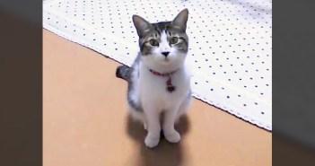 誘ってきた猫