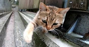猫パンチしてくる子猫