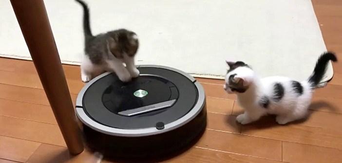 ルンバを整備する子猫達