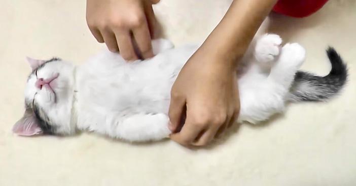 イタズラされる子猫