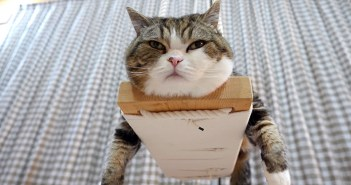 ブランコ猫