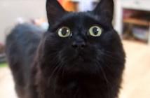会話する猫