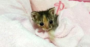 小さな身体の子猫