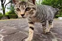 トコトコ歩いてきた猫