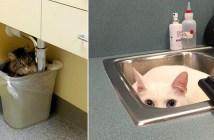動物病院に行った猫