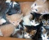 山の中で出会った2匹の母猫。登山者に駆け寄り、9匹の子猫を助けて欲しいとお願いしてきた!
