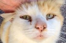 心を開いた猫