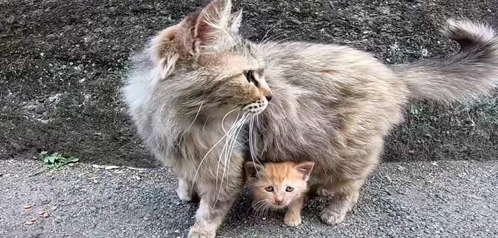 子猫が可愛くカリカリを食べていたら母猫がやって来た♪ 母猫に見守られながら、愛らしく動き回る子猫の姿にホッコリ♡