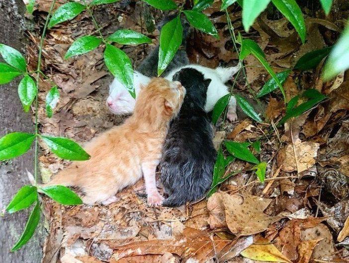 雨の中の子猫達