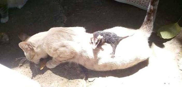 不思議な赤ちゃんと猫