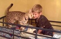 男の子を起こす猫