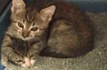 病気の妹を心配する兄猫