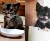 保護した時はスプーンほどの大きさしかなかった子猫。優しい人達の力を借りて、たくましく成長していく姿に胸が熱くなる
